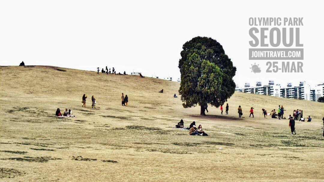 Lonely Tree 왕따나무