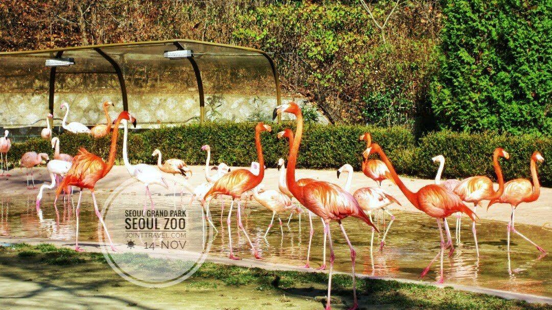 สวนสัตว์กรุงโซล (Seoul Zoo, 서울동물원)