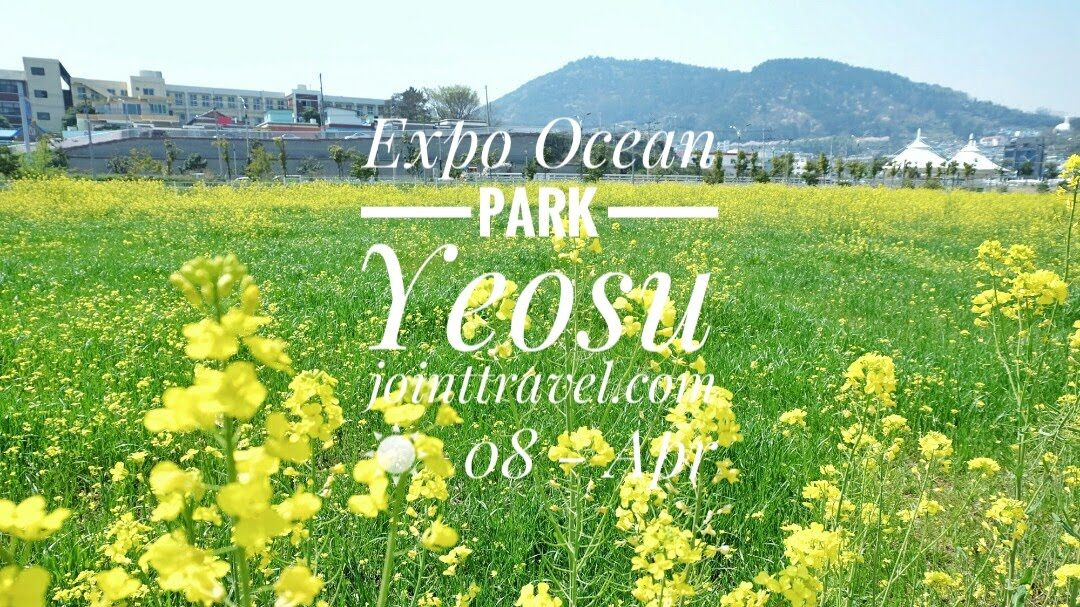 Expo Ocean Park (엑스포해양공원)